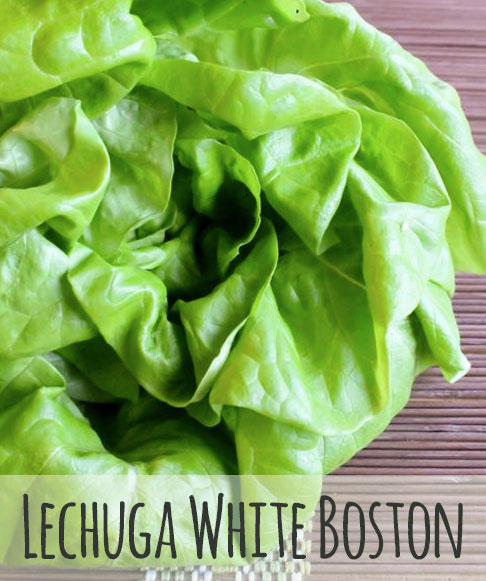 lechuga-white-boston